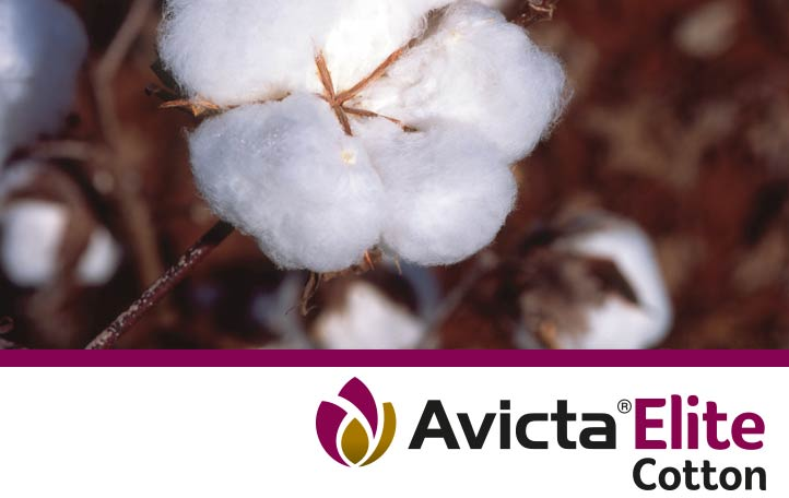 Avicta Elite Cotton