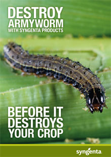Fall Armyworm brochure
