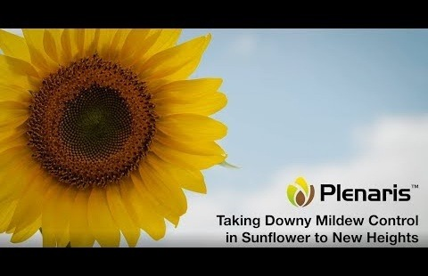 PLENARIS™ - Taking Downy Mildew Control in Sunflower to New Heights