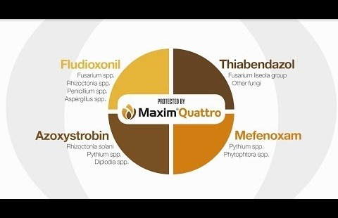 Ready for whatever comes your way, MAXIM® Quattro fungicide seed treatment